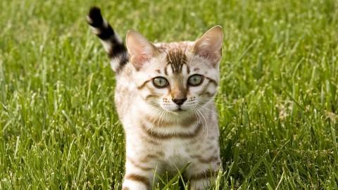котенок силый полосатый в зеленой траве