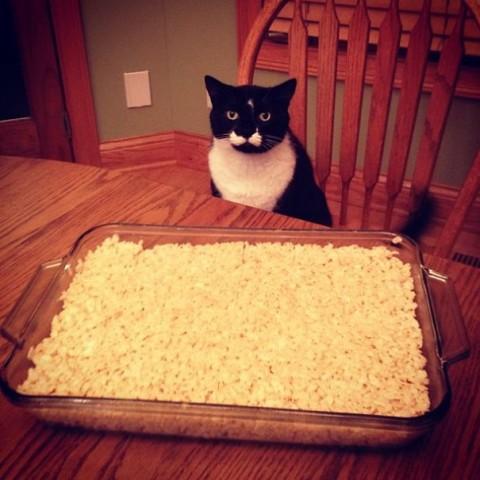 смешное фото котов черный кот за столом фото