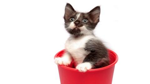 котенок в красном стакане сидит и смотрит смешно