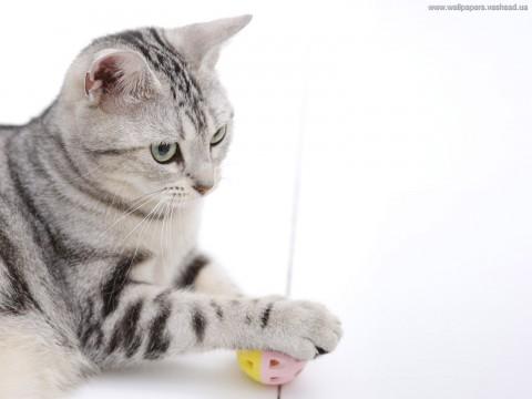 кот полосатый с игрушкой