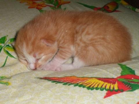 фото рыжий котенок спит сладка