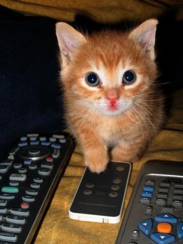рыжий котенок смотрит в окно милый возле пуьта
