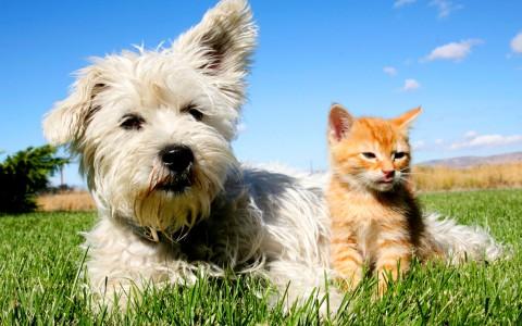 8888-рыжий-кот-и-пес