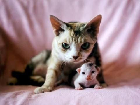 мама кошка с маленьким котенком