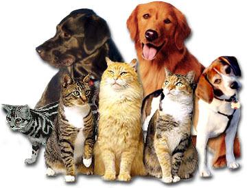рыжий кот и собаки фото