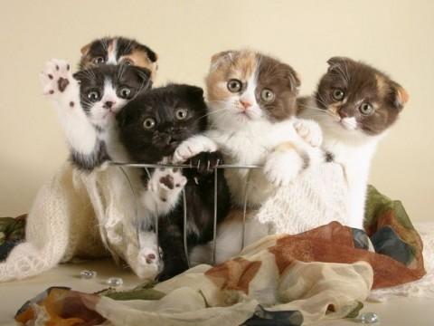 фото котята красивые смешные цветные