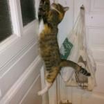 смешное фото котов открывает дверцу двери