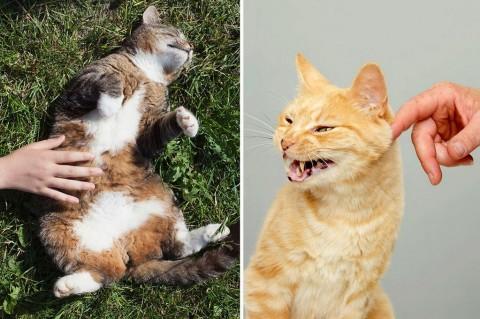 фото два кота рыжий и серый
