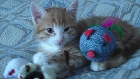 котенок рыжий с клубочокм ниток смешной и милый