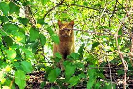 кот рыжий в кустах