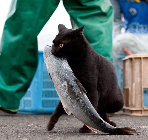смешное фото котов кот и рыба унес
