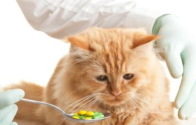 кошка рыжая ветеринар таблетки на ложке грустный