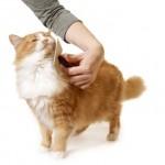 Забота о шубке любимых кошек