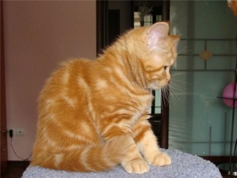 фото котенок рыжий сидит милый ркасивый