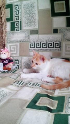 маленький рыжий котенок с цветами красивый фото смешной и хороший на диване