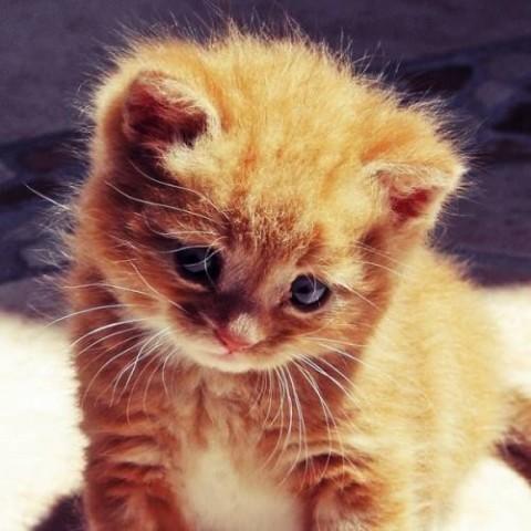 маленький рыжий котенок с цветами красивый фото милый
