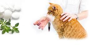 При раке молочной железы есть боль и температура