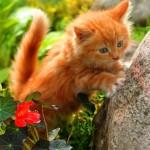маленький рыжий котенок с цветами красивый фото
