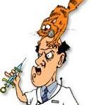 картинка рыжий кот на голове врача укол вакцинация