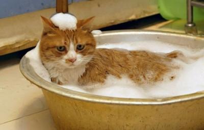 кот рыжий лежит в тазу с водой и пеной