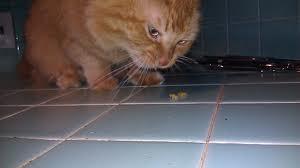 кот-ест-оливки