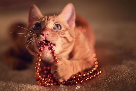 рыжий кот кусает бусы