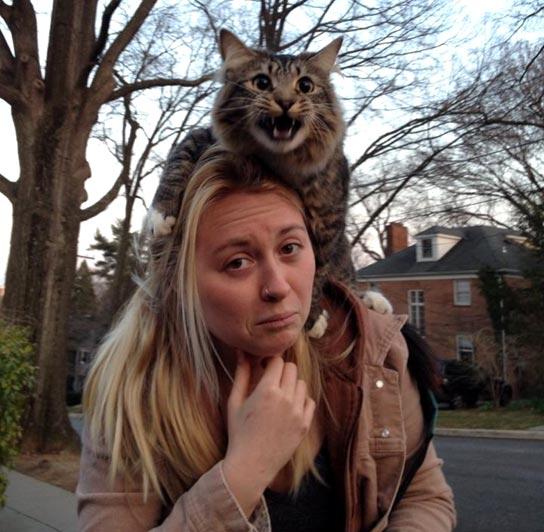кот-на-хозяйке-боится