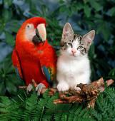 кот-попугай-яркий