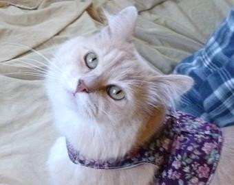 кот-смотрит