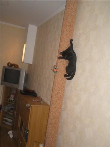 черный кот высоко на столбе