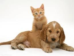 рыжий котенок и щенок милые фото