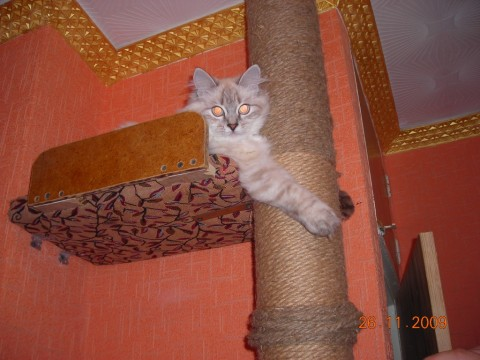 коти-когтеточка-домик
