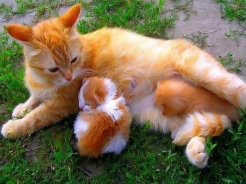 kucing_lucuu
