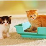 лоток и котята