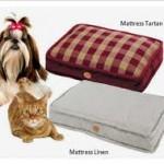 Матрас и кот рыжий
