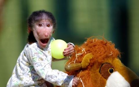 фото обезьянка смешна