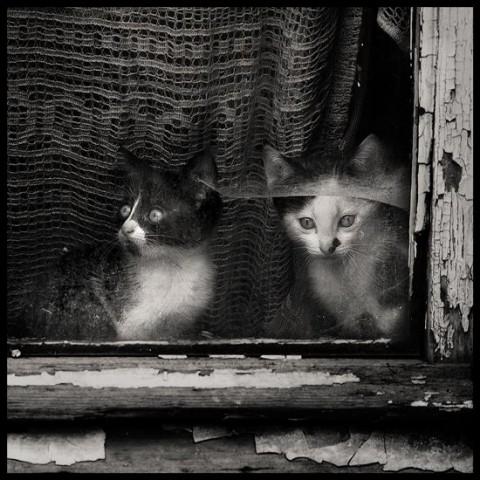 photopodborka_078