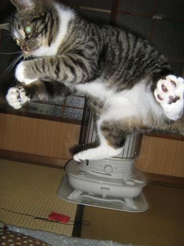 кот подпрыгнул высоко смешно