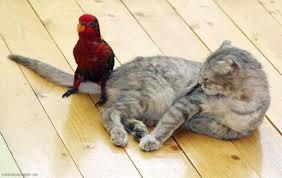 красный попугай сидит на хвосте у кота смешно фото