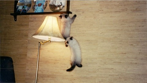 котята лезут на верхе фото
