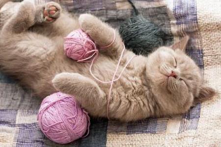 фото кот спит клубок ниток