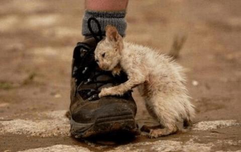уличный-кот