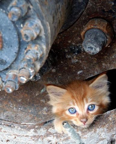 фото котенок рыжий уличный бродяга