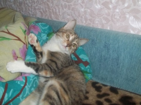 фото красивый кот полосатый улыбается