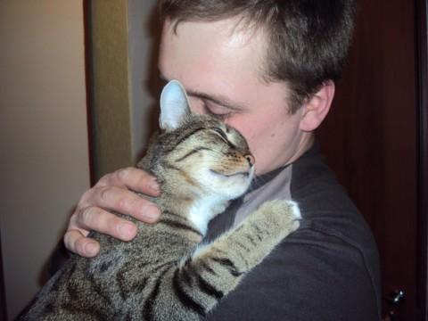 кот с хозяином полосатый красивый