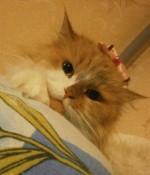 Как назвать питомник кошек?