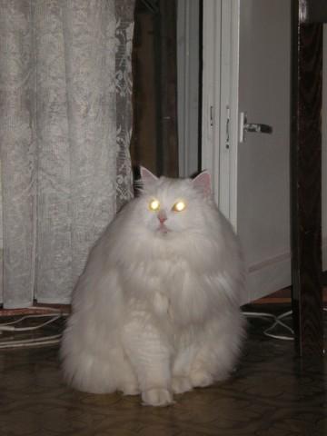Коты - инопланетяне?