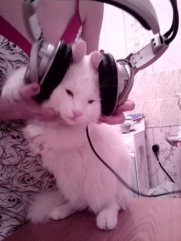 фото белый кот в наушниках