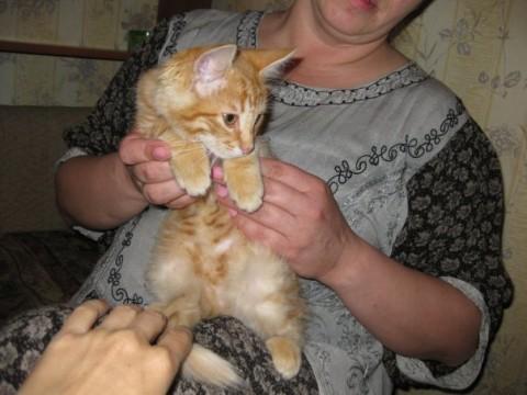 фото женщина с рыжим котенком