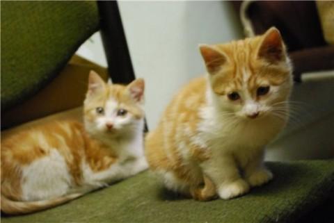 котята рыжие смешные